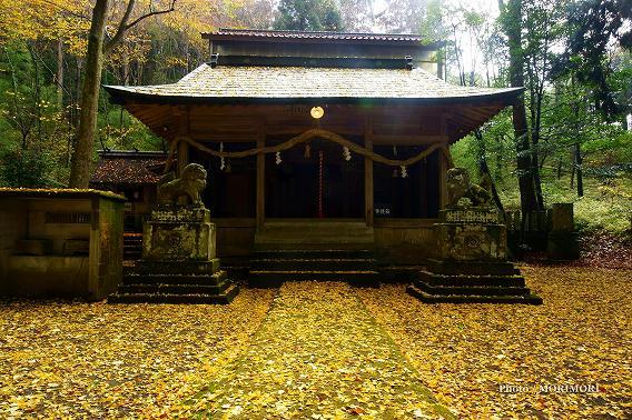 久住・九重紅葉旅行(4) 白鳥神社の黄葉
