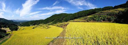 佐賀県蕨野の棚田(大平棚田) パノラマ写真