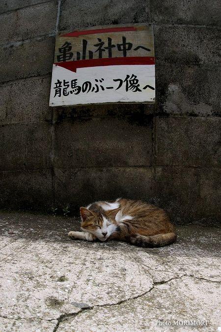 龍馬通り 猫